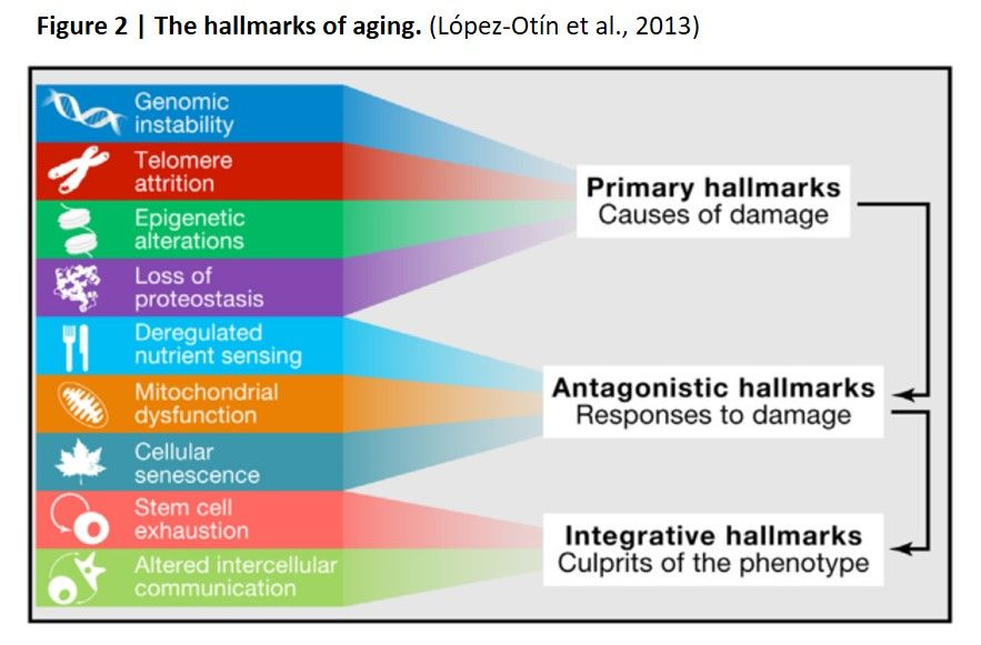 the hallmarks of aging