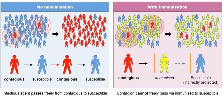 coronavirus inmunidad de grupo