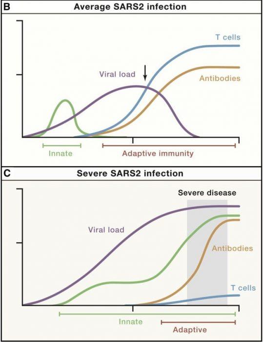 infección severa vs normal coronavirus